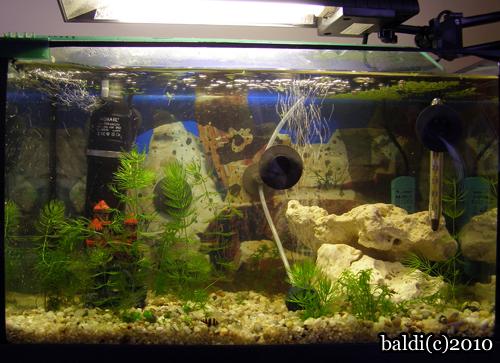 nowe akwarium